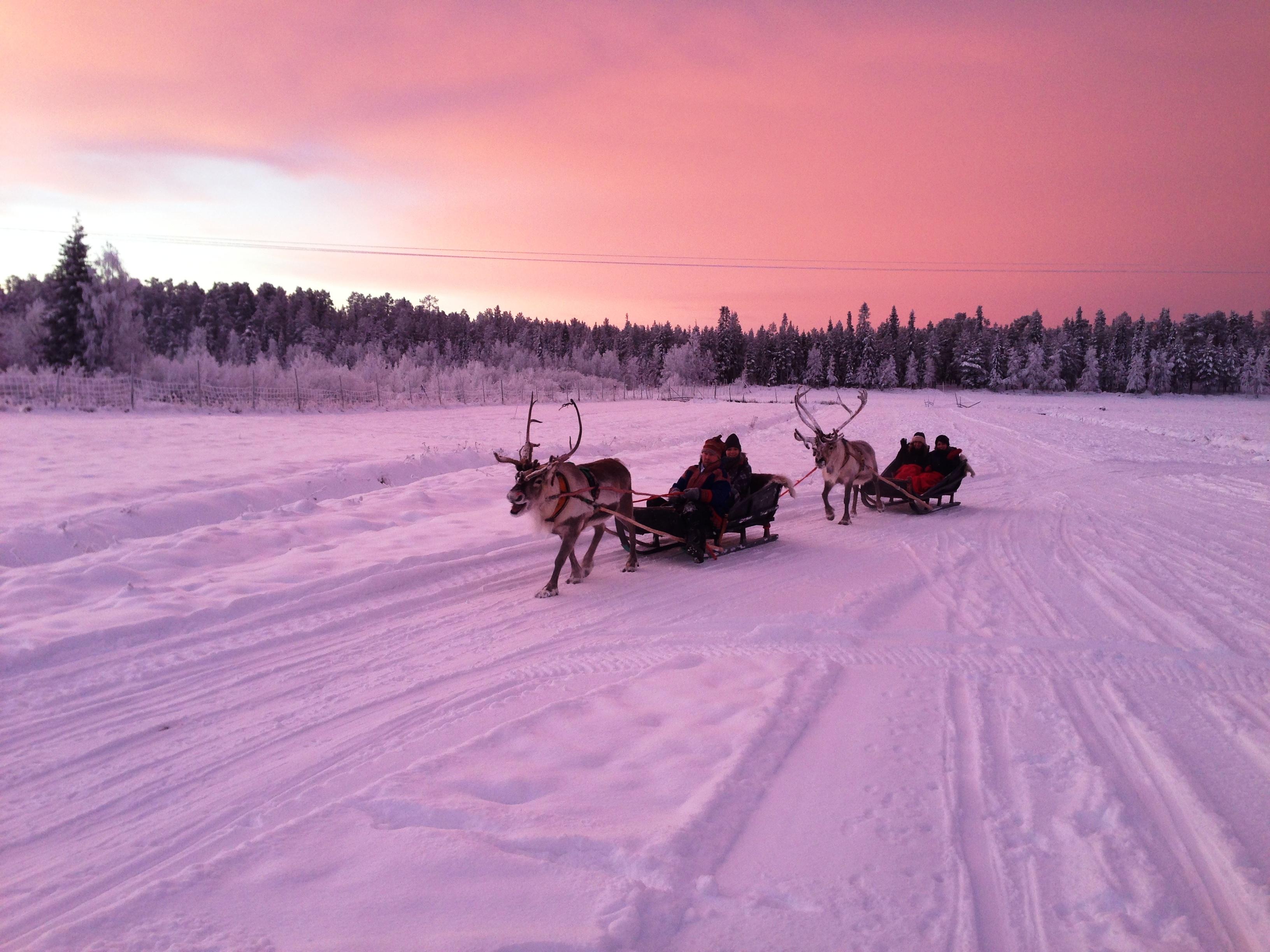 lpl_reindeer_landscape_19390582449_o.jpg